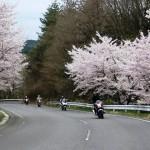 3_桜の咲くワインディング