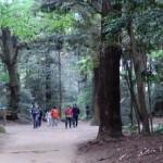 8_神宮内の森を散策