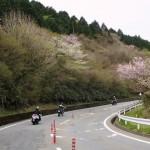 4_山桜が残るワインディング